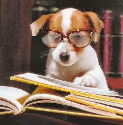 Chien a lunettes -Personnification dans l'ecriture